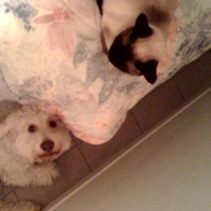 Tahvo + Mimi have Thanksgiving